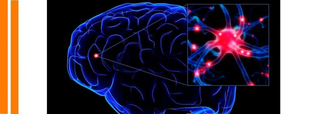 plasticidad_neuronal
